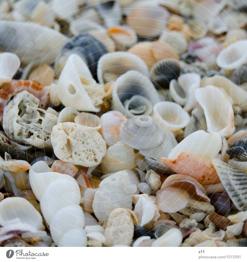 many colorful shells Nature Sun Summer Beautiful Beach Vacation & Travel Collection Search Mussel shell Empty Loneliness Washed up Many Spiral Snail shell Heap
