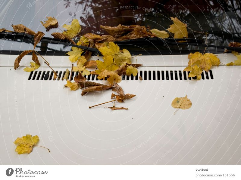 Leaf Autumn Car Motor vehicle Window pane Slice Car Window October Car Hood