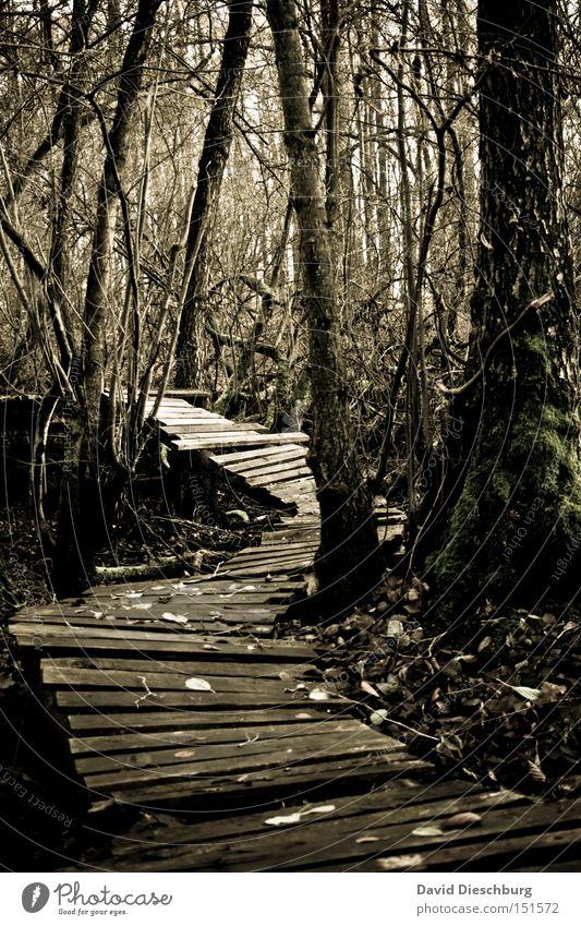 Nature Tree Plant Leaf Forest Autumn Wood Lanes & trails Going Fear Branch Footpath Creepy Storm Virgin forest Footbridge