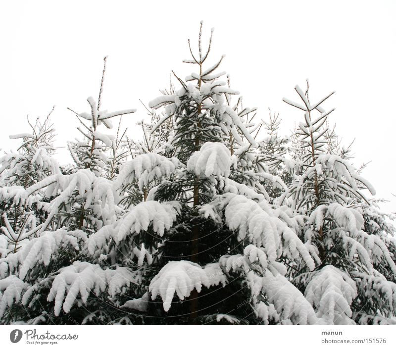 Nature White Tree Relaxation Loneliness Calm Landscape Winter Forest Cold Snow Gray Feasts & Celebrations Bright Moody Ice