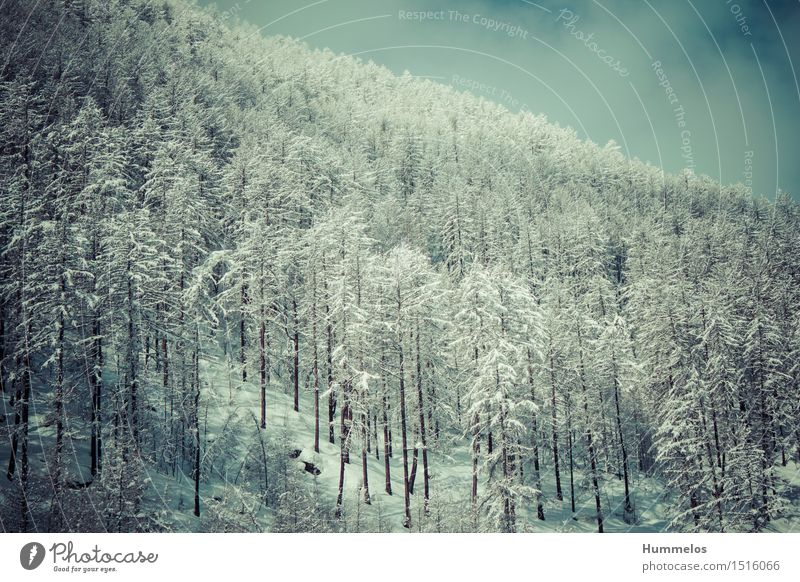 Vacation & Travel Winter Forest Snow Lifestyle Tourism Hiking Esthetic Trip Adventure Winter vacation