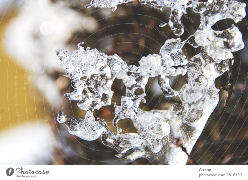 ossified Work of art Sculpture Nature Plant Elements Winter Ice Frost Bushes Hedge Twig Freeze Glittering Firm Cold Natural Brown Gold White Bizarre Solidify