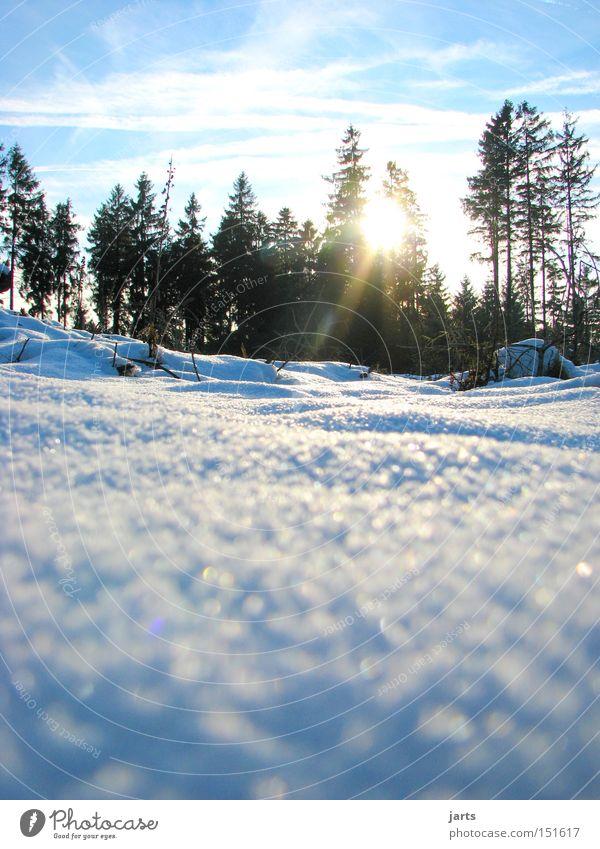 Sky Sun Winter Forest Cold Snow Fir tree Tree Coniferous trees Seasons Winter forest