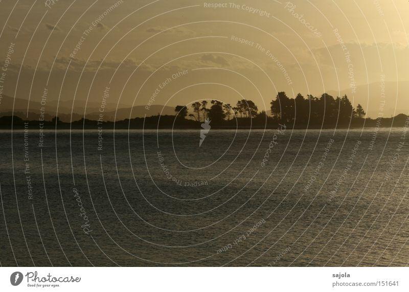 Water Tree Ocean Sadness Landscape Moody Fog Horizon Soft Peace Dusk Haze New Zealand