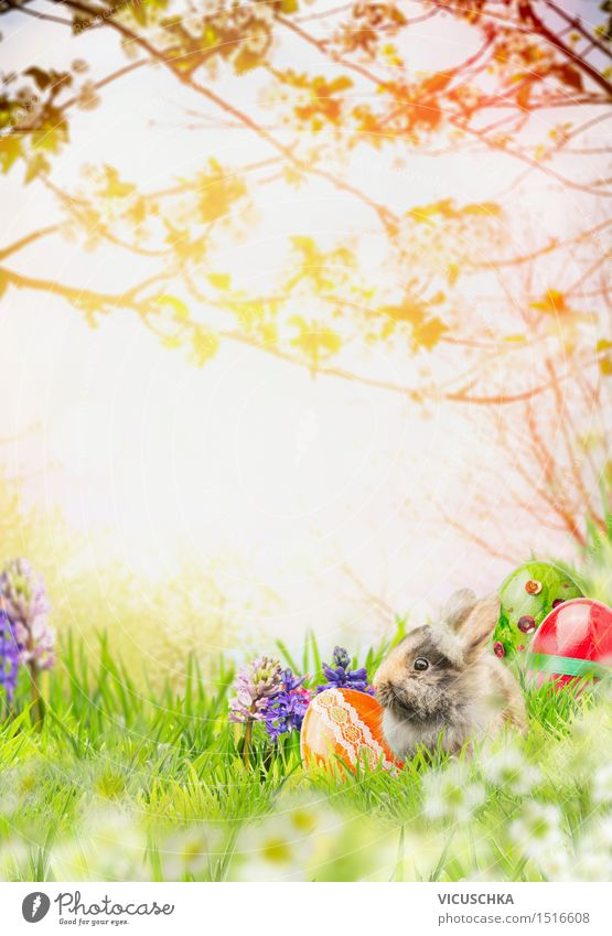 Easter bunny with spring flowers and Easter eggs in spring garden Style Design Garden Feasts & Celebrations Nature Landscape Sunlight Spring Beautiful weather