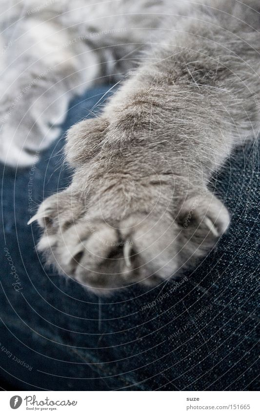 Animal Relaxation Gray Cat Friendship Together Sit Safety Jeans Soft Protection Pelt Warm-heartedness Pants Mammal