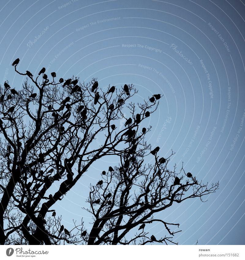 Tree Dark Together Bird Creepy Agree Branchage Encounter Spooky Assembly Raven birds Flock of birds