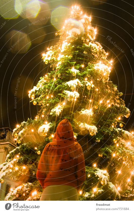 Woman Christmas & Advent Beautiful Tree Winter Snow Human being Night Lighting Gold Christmas tree Fairy tale Fairy lights Little Red Riding Hood Event lighting
