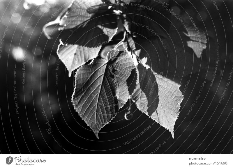 Tree Leaf Autumn Emotions Park Flat (apartment) Analog Potsdam Beech tree Edge Halo