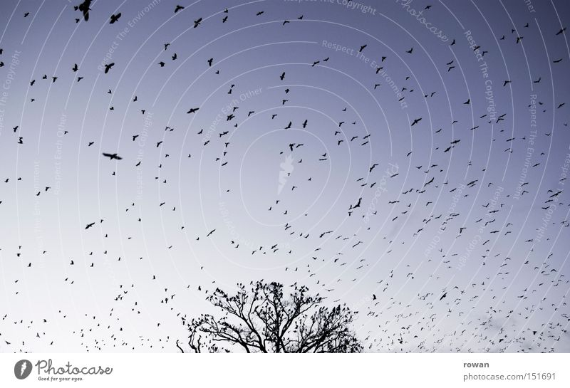 flocked birds Bird Flock of birds Flying Raven birds Tree Branchage Creepy Plagues False Surrealism Aviation Flight of the birds