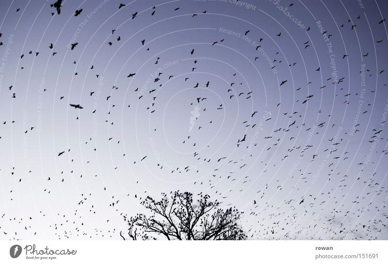 Tree Bird Flying Aviation Creepy Surrealism False Branchage Flock Raven birds Plagues Flock of birds
