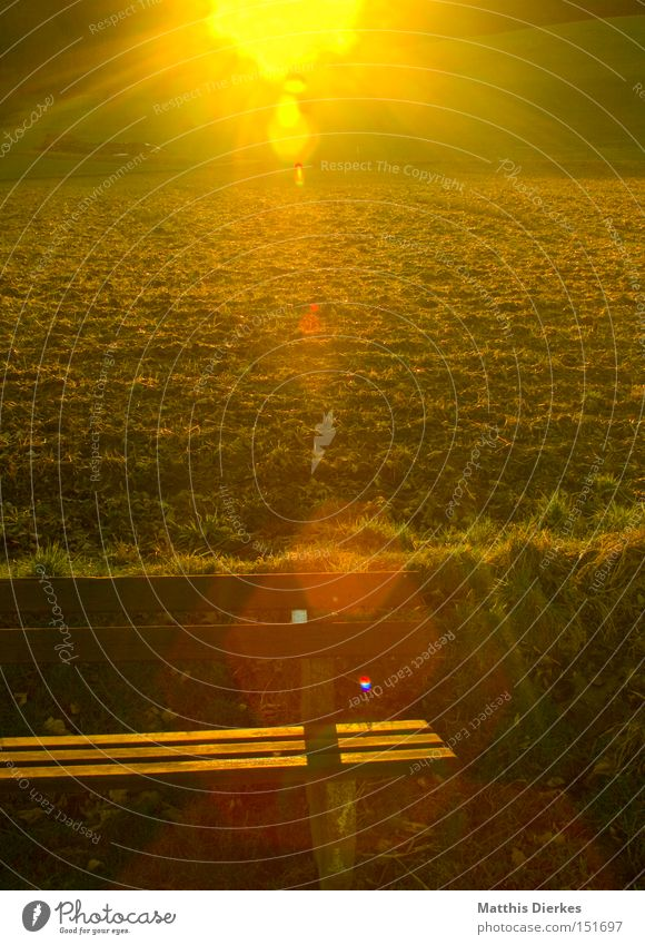 Nature Sun Joy Calm Meadow Field Hiking Break To go for a walk Bench Serene Sunset