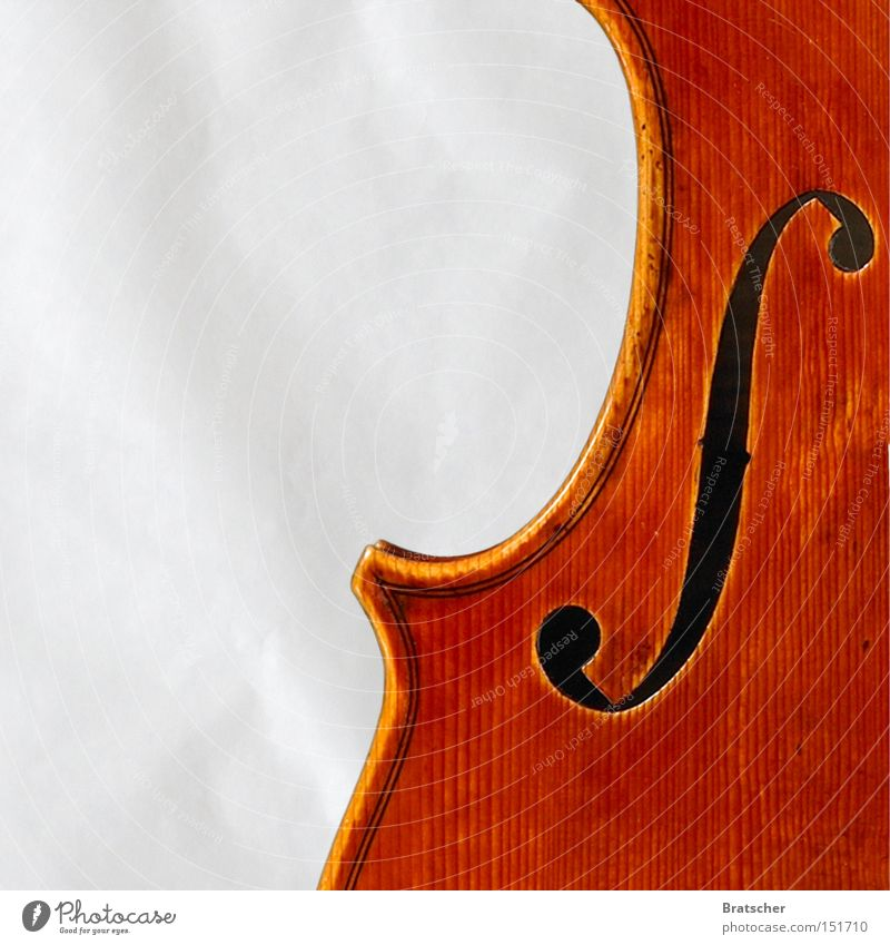 Music Bright Art Esthetic Musician Good Musical instrument Classical Violet plants Orchestra Arts and crafts  Flower Make music Viola Symphony