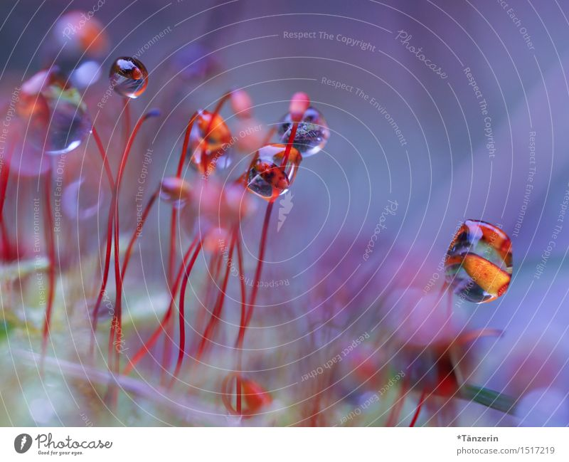 techno party Nature Plant Elements Drops of water Autumn Winter Rain Moss Garden Exceptional Happiness Fresh Funny Natural Wild Multicoloured Joy Colour photo