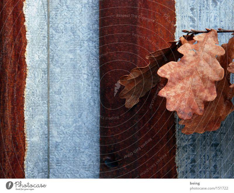 Red Winter Cold Metal Transience Derelict Rust Tin Oak tree Oak leaf