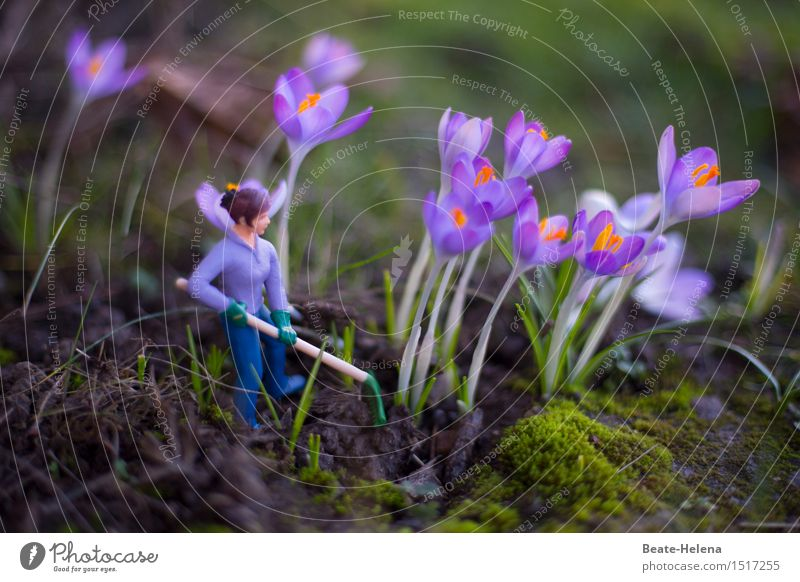 Nature Plant Blue Green Blossom Spring Meadow Feminine Style Garden Exceptional Work and employment Park Decoration Weather Earth