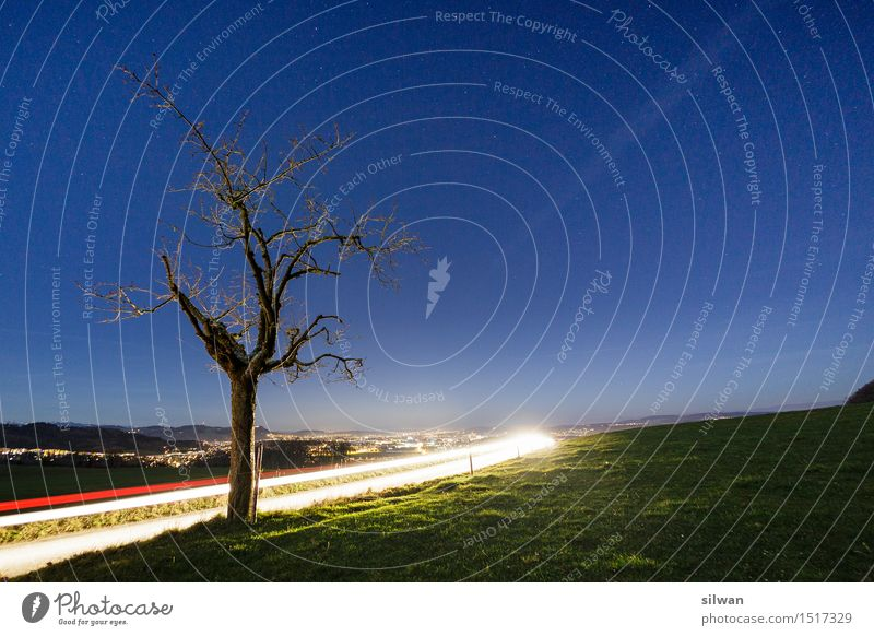 Light track tree at night Landscape Sky Cloudless sky Night sky Stars Horizon Autumn Tree Grass Meadow Illuminate Stand Esthetic Cool (slang) Infinity Beautiful