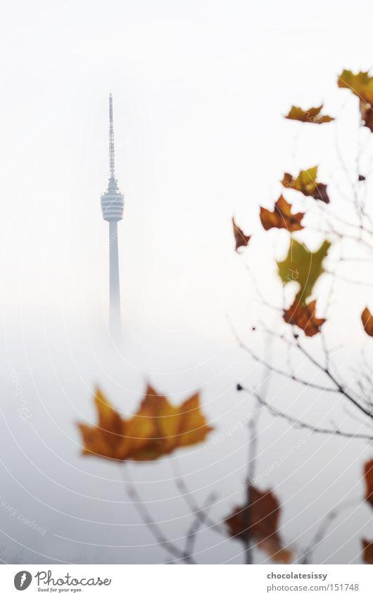 Leaf Autumn Fog Vantage point Tower Monument Radio (broadcasting) Landmark Stuttgart Television tower Broadcasting tower Baden-Wuerttemberg