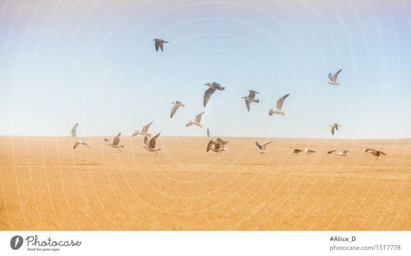 Seagulls on sand flying away Environment Nature Landscape Sand Sky Hill Coast Beach Animal Wild animal Bird Swan Group of animals Flock Exceptional Blue Brown