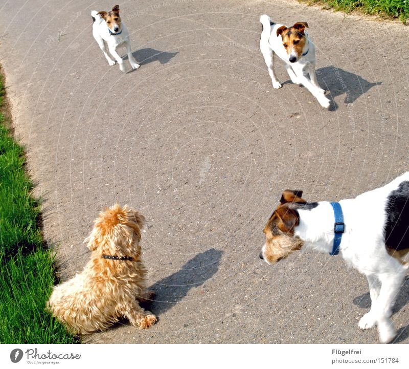 Dog Summer Animal Lanes & trails Sit Walking Communicate Sweet To go for a walk Curiosity Repeating Odor Mammal Flirt Image editing Dachshund