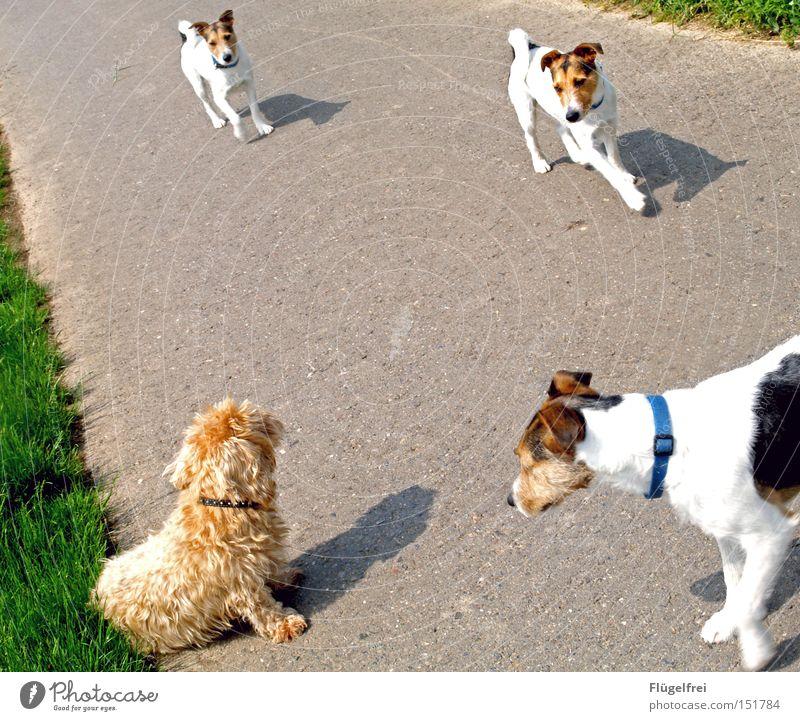 Dog Summer Animal Lanes & trails Sit Walking Communicate Sweet To go for a walk Curiosity Repeating Odor Mammal Flirt Image editing Dachshund