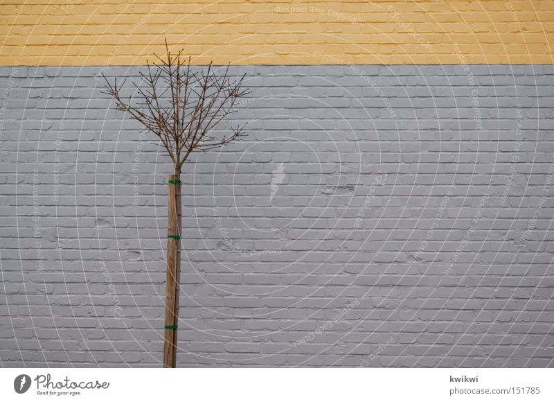 tree in front of wall Tree Wall (building) Bushes Gray Yellow Autumn Winter Twig Branch Wall (barrier) Brick Stone