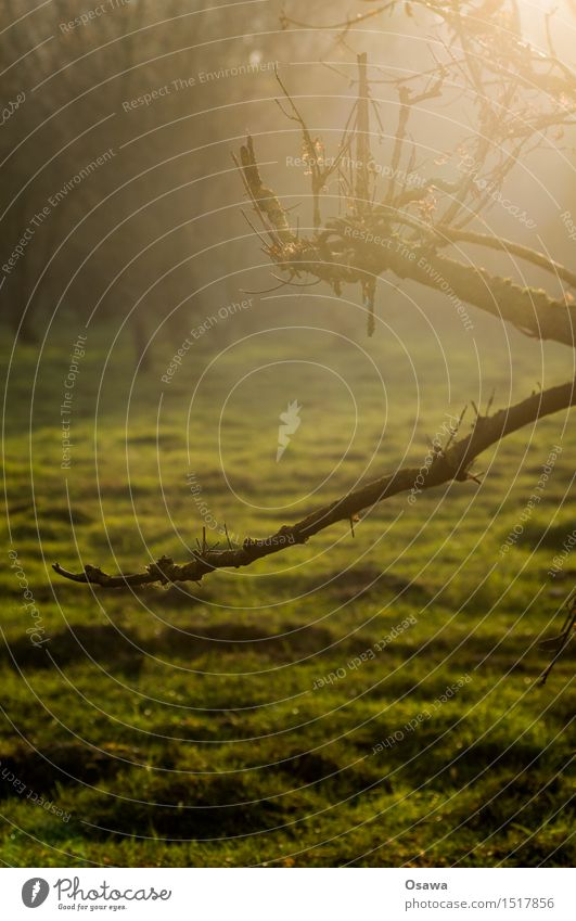 backlight Nature Forest Clearing Meadow Pasture Tree Branch Twig Back-light Autumn Day Colour photo Subdued colour Shallow depth of field Green