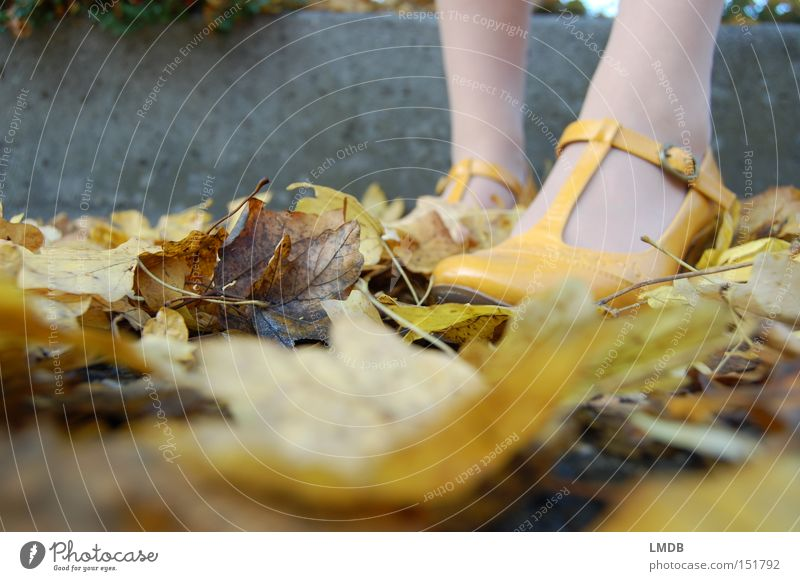 Yellow as autumn Footwear High heels Autumn Leaf Perspective Clothing straps Legs Feet Ankle Exterior shot