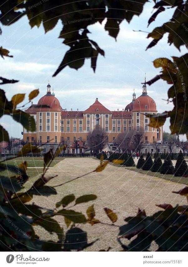 Moritzburg Castle Hedge Romance Saxony Architecture Moritzburg castle