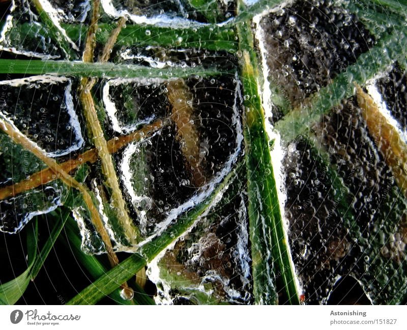 the meadow in the freezer Winter Water Ice Frost Grass Meadow Cold Green White Blade of grass Frozen Ice sheet Contrast Deserted Copy Space right Reflection