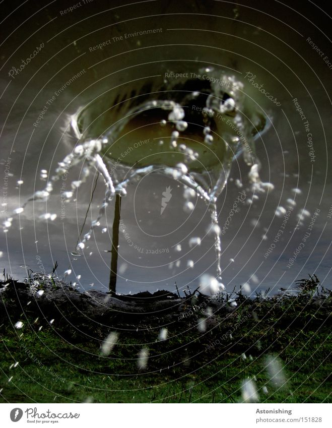 Water Sky Blue Dark Meadow Grass Wet Drops of water Whimsical Electricity pylon Inject Puddle Mirror image Inverted Water reflection