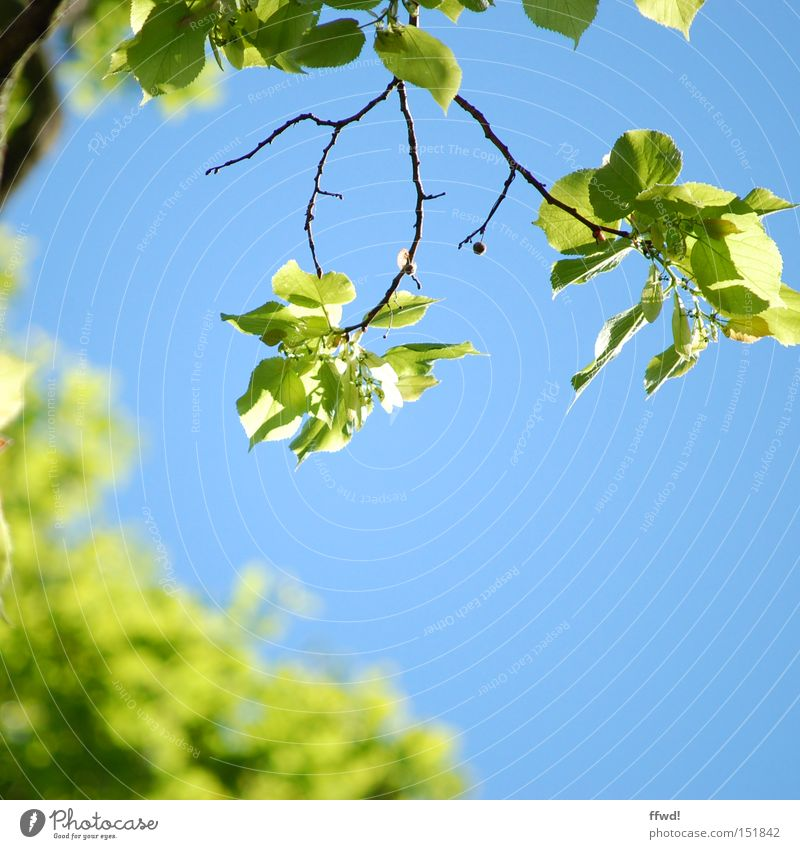 soon ! Colour photo Exterior shot Day Shallow depth of field Life Environment Nature Plant Sky Spring Climate Beautiful weather Leaf Park Breathe Blossoming