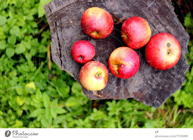 apples on a log 2 Nature Vacation & Travel Beautiful Summer Warmth Emotions Autumn Spring Meadow Feminine Healthy Garden Food Moody Fruit Park