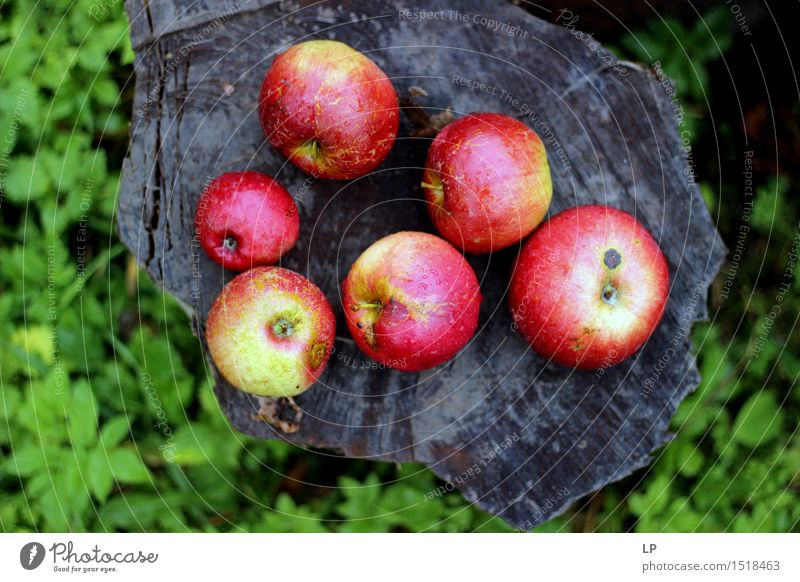 apples on a log 1 Nature Vacation & Travel Beautiful Summer Joy Environment Warmth Emotions Autumn Eating Meadow Feminine Healthy Lifestyle Garden