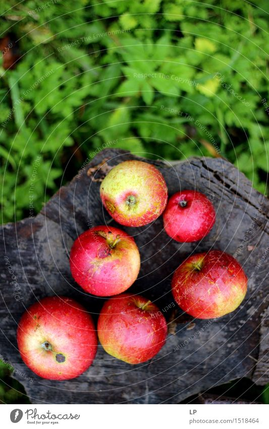 apples on a log Nature Vacation & Travel Joy Life Emotions Grass Healthy Lifestyle Garden Food Fruit Leisure and hobbies Fresh Decoration Nutrition Happiness