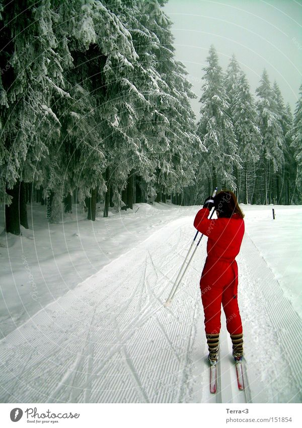 There's a man standing in the woods. Driving Snow Cross country skiing Cross-country ski trail Forest Tree Fir tree Sports Working clothes Red Snowsuit Skis