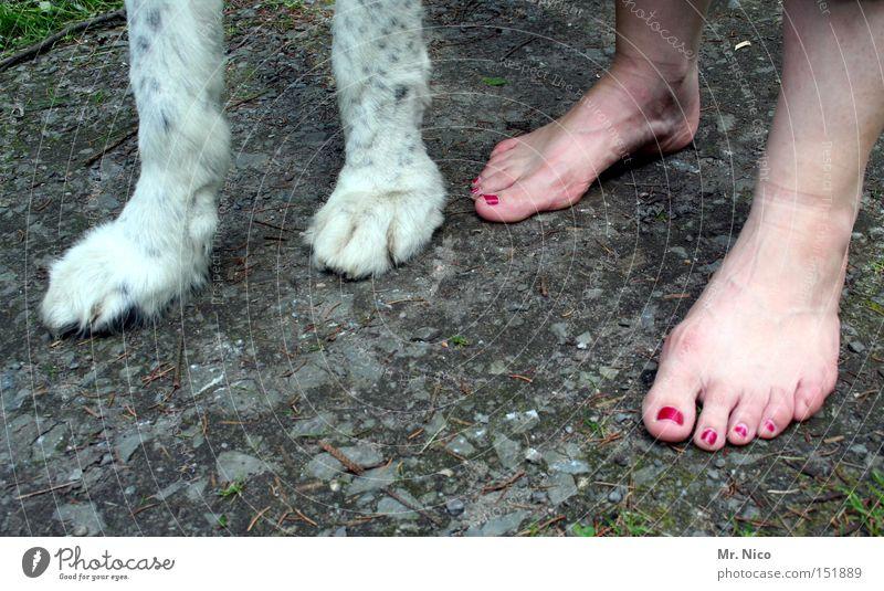 quadrupeds Paw Toes Nail polish Pelt Dog Walk the dog Barefoot Claw Mammal Trust Woman Feet Legs four-legged friends bipeds