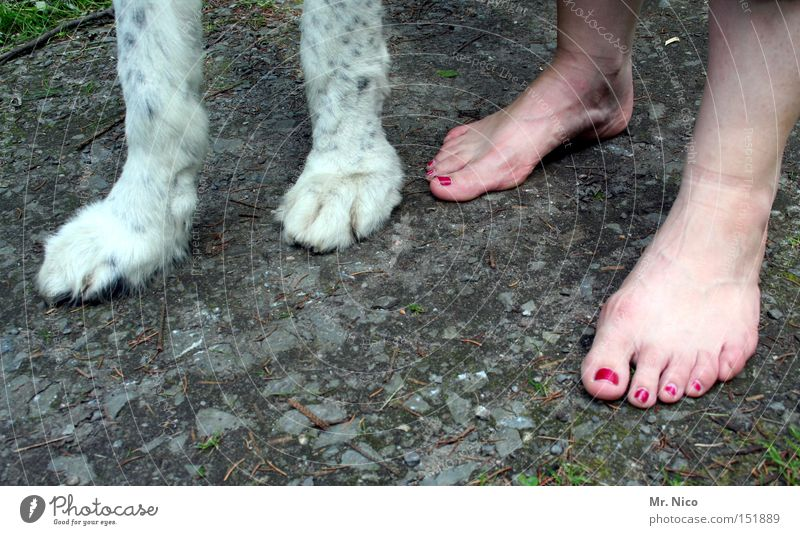Woman Dog Legs Feet Pelt Trust Mammal Paw Barefoot Toes Claw Nail polish Cosmetics Walk the dog