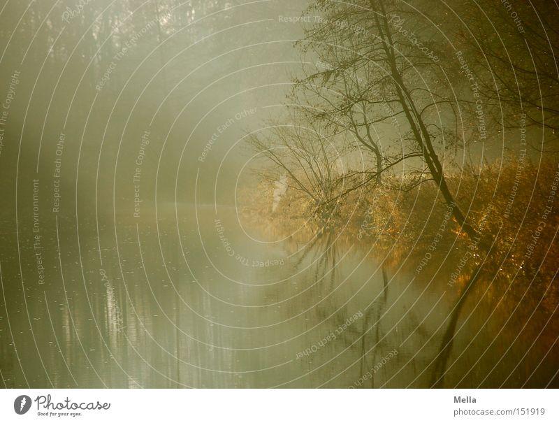 Nature Water Tree Calm Lake Landscape Fog Environment River Bushes Natural Lakeside River bank Dawn