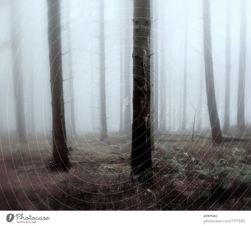 nebulous Fog Forest Tree Moody Cold Autumn Landscape Nature