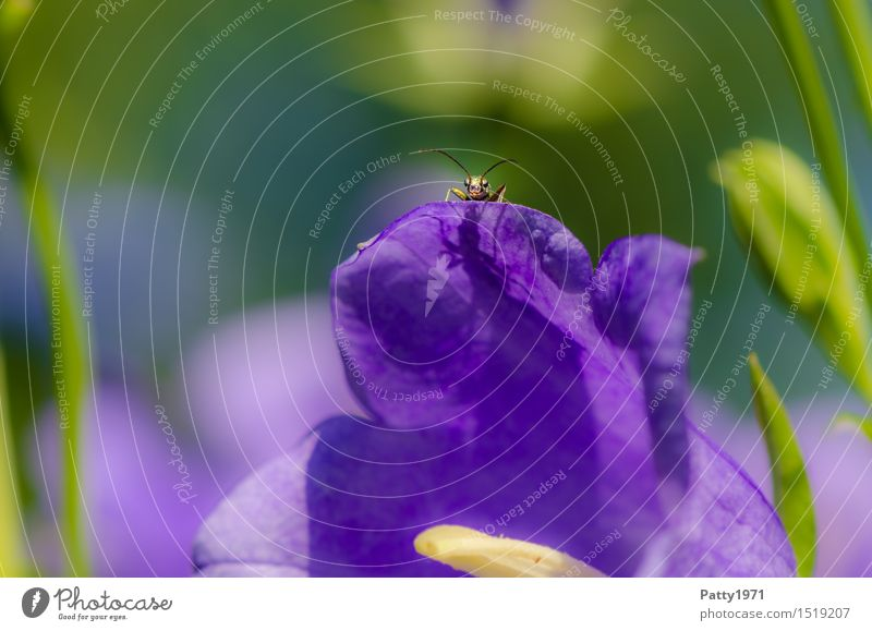 Nature Green Animal Horizon Contentment Perspective Observe Violet Insect Beetle