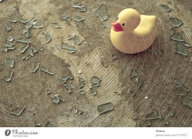 Window Happy Bird Glass Dangerous Broken Duck Shard Splinter Squeak duck Slivered Glass fragment