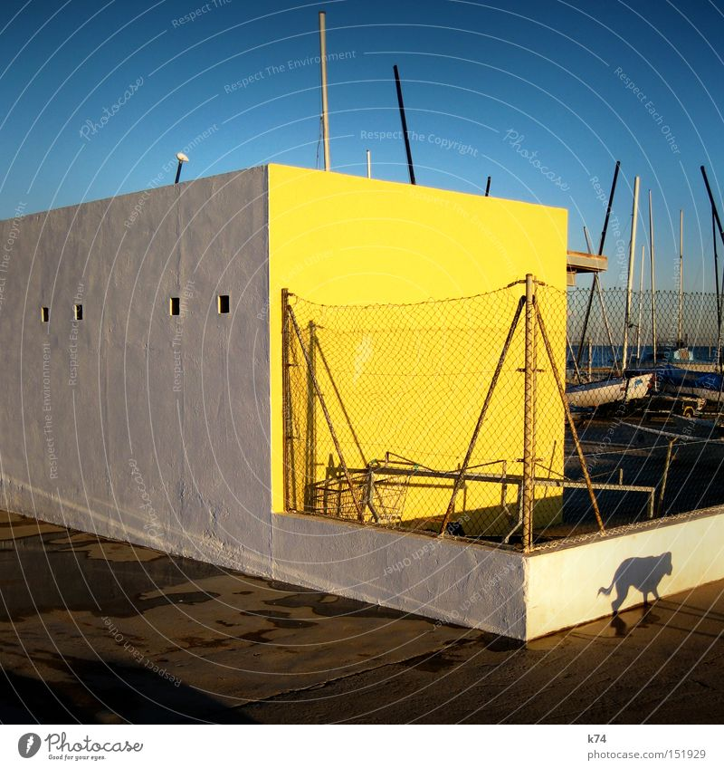 sneaky freaky dog Dog Light Shadow Watercraft Sail Wall (barrier) Wall (building) Yellow Blue Contrast Walk the dog Harbour Mammal Creep