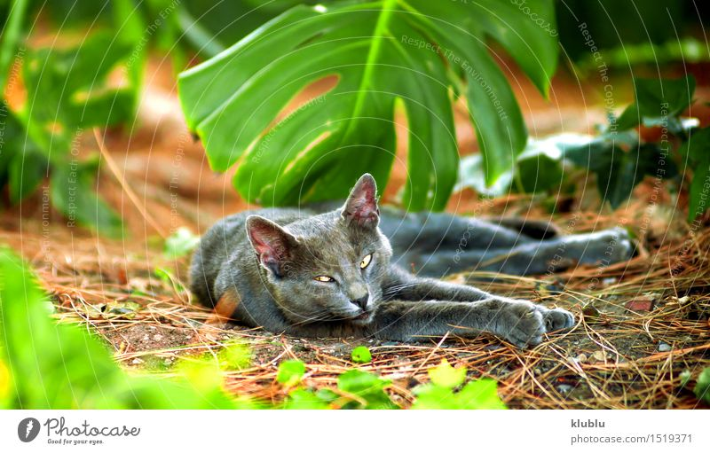 An street cat resting Beautiful Playing Baby Friendship Nature Animal Town Street Hair Pet Cat Paw Stone Sit Stand Small Funny Cute Gray Black White Appetite