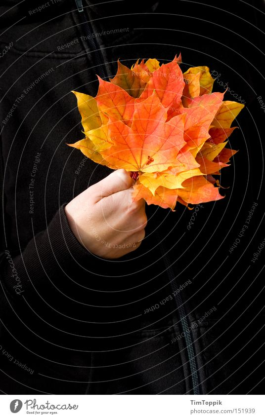 Tree Leaf Yellow Autumn Orange Transience Jacket Seasons Playing Playing card Poker Deciduous tree Autumnal Zipper Yellowed Game of cards