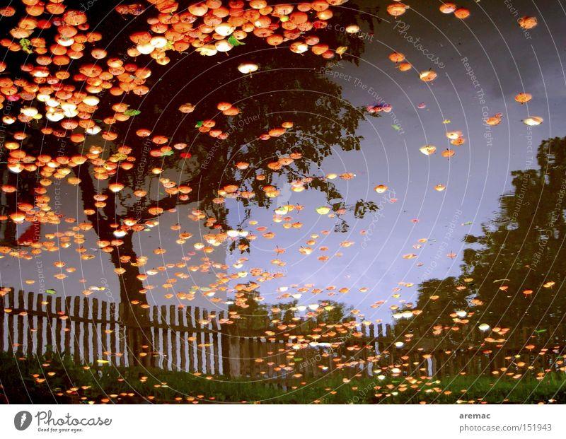 Water Tree Autumn Transience Apple Fruit trees Harvest Fence Pond Apple tree Pomacious fruits