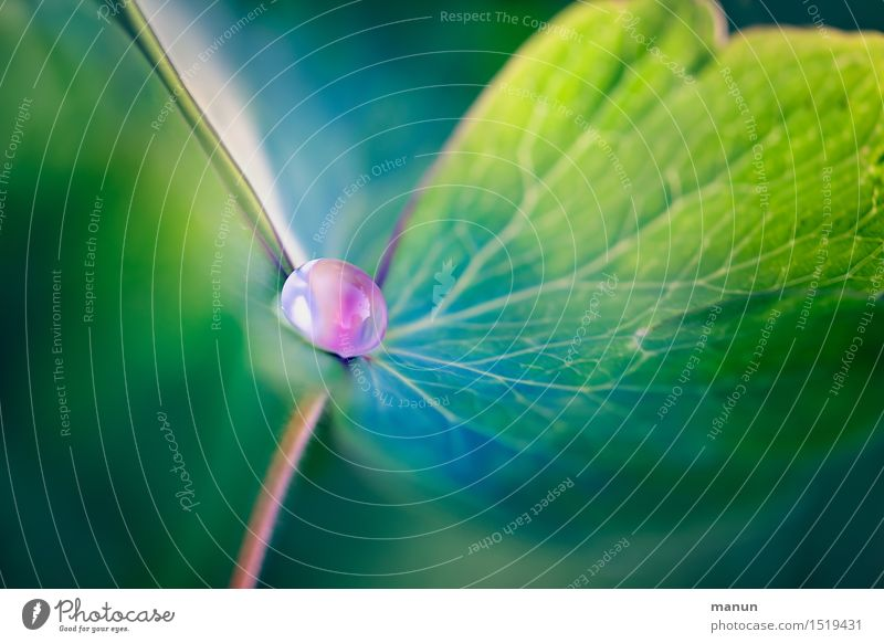 Nature Plant Green Summer Leaf Spring Natural Pink Esthetic Drops of water Fantastic Turquoise Dew Foliage plant