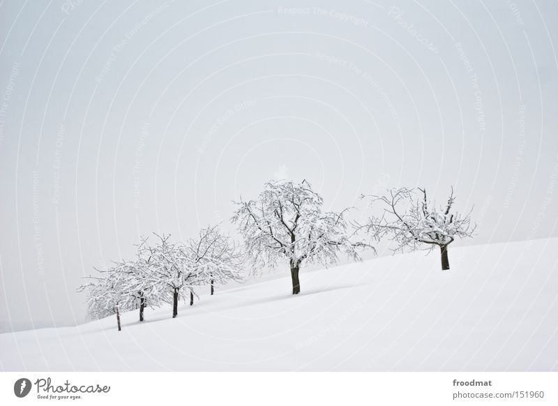 White Tree Winter Calm Cold Snow Mountain Gray Gloomy Switzerland Bleak Minimal
