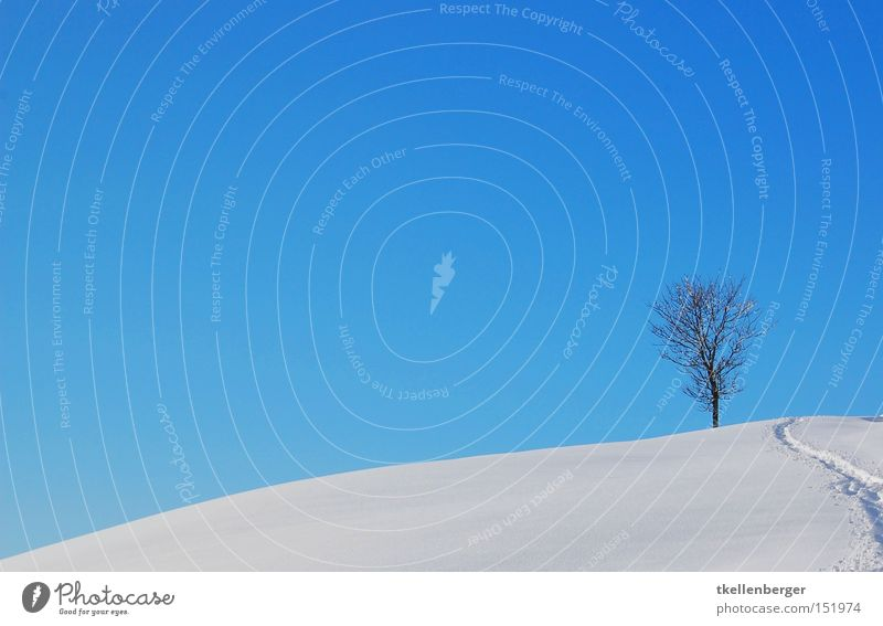 Two Worlds Tree Earth Sky Blue Snow Snow shoes Background picture Contrast Landscape Pensive Weather Tracks Footprint Winter Illuminate