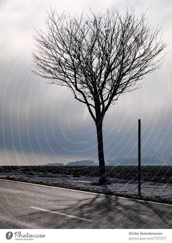 Nature Sky Tree Winter Black Clouds Street Gray Landscape Ice 2 Fog Frost Stand Thin Branch
